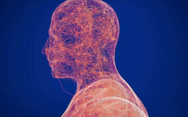 Illustration 3D des voies neuronales, reliant les parties du cerveau. (Crédit : ChrisChrisW via iStock by Getty Images)