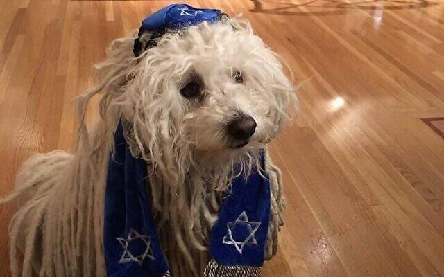 Beast, le chien de Mark Zuckerberg, sur une photo portant une kippa et un tallit (Crédit : photo Facebook).