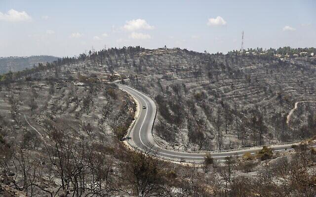 Des arbres incendiés à la suite d'un incendie majeur qui s'est déclaré dans une forêt près de Beit Meir, à l'extérieur de Jérusalem hier, le 16 août 2021. (Crédit : Yonatan Sindel/Flash90)