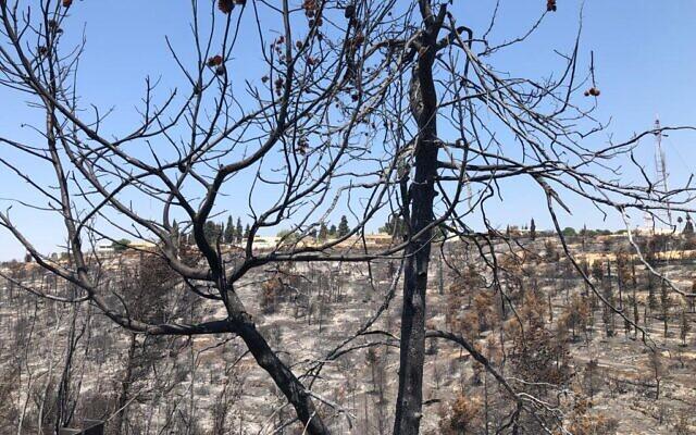 La colline de l'hôpital d'Eitanim après un incendie de forêt, le 21 août 2021. (Crédit : Times of Israel Staff)