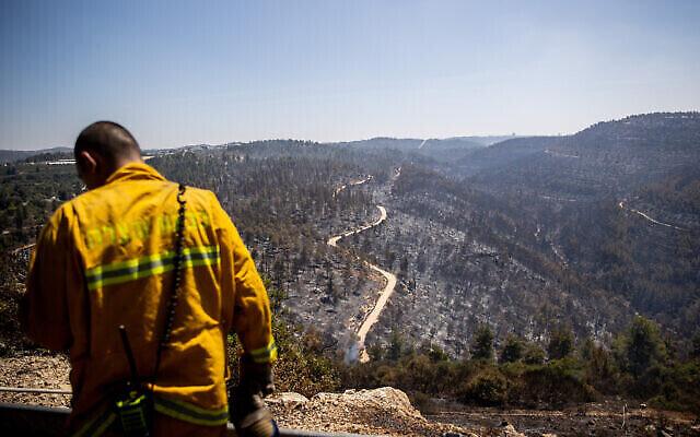 Un membre des équipes de secours regarde les arbres brûlés après  un gigantesque incendie qui a touché les collines de Jérusalem, le 17 août 2021. (Crédit :  Yonatan Sindel/Flash90)