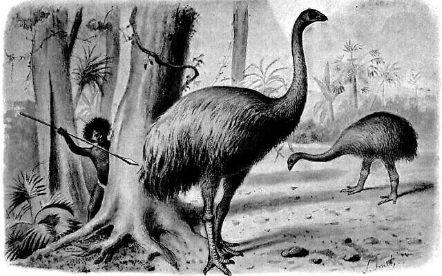 Illustration artistique d'un ancien oiseau moa chassé par les humains (Extrait du livre « Monstres éteints », 1897)