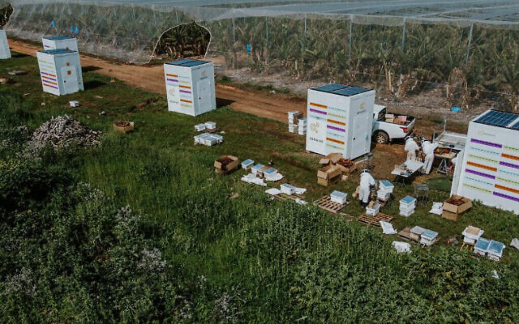 Des apiculteurs relogeant des abeilles mellifères de ruches traditionnelles dans le Beehome de Beewise. (Autorisation)
