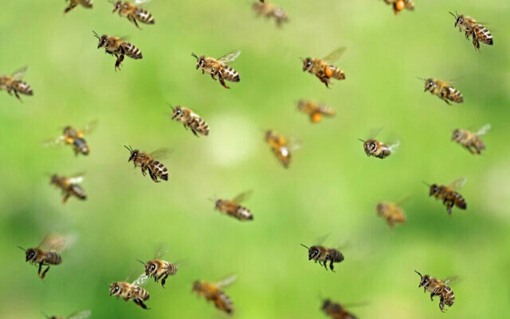 Des abeilles essaiment après avoir récolté du pollen au printemps. (Crédit : Andreas Häuslbetz sur iStock by Getty Images)