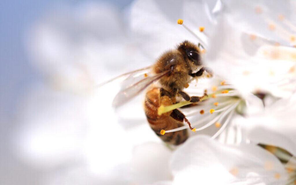 Une abeille sur une fleur sauvage. (Crédit : Hayatikayhan sur iStock par Getty Images)