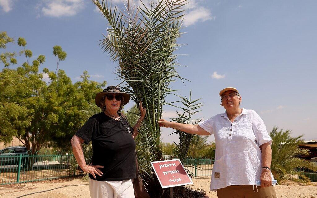 """Les scientifiques israéliennes Sarah Sallon (à gauche) et Elaine Solowey se tiennent à côté de """"Judith"""", un palmier femelle germé à partir de graines vieilles de 2 000 ans découvertes dans le désert de Judée, avant de le transplanter dans le sol du désert du Néguev, au kibboutz Ketura, dans le sud d'Israël, le 27 septembre 2021. (Crédit : Emmanuel DUNAND / AFP)"""