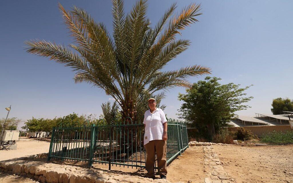 """La scientifique israélienne Elaine Solowey pose à côté de """"Methuselah"""", le premier palmier mâle ayant germé à partir de graines vieilles de 2 000 ans découvertes dans le désert de Judée, au kibboutz Ketura, dans le sud d'Israël, le 27 septembre 2021. (Crédit : Emmanuel DUNAND / AFP)"""