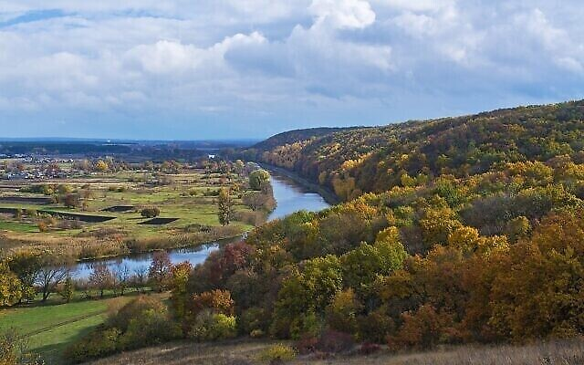 Une forêt en Ukraine. (Aisheyko, CC BY-SA 4.0, Wikimedia Commons)