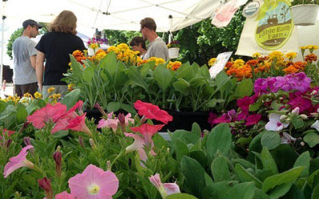 Edible Earth Farm flowers (All photos by Brian Cohen)