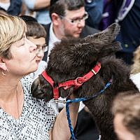 Jacob the donkey was a huge hit with the children.     Photo by Esther Wayne