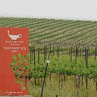 A view of the vineyard at Yarden Golan Heights Winery. (Photo courtesy of Facebook)