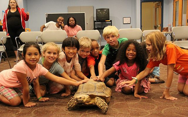 Campers loved petting the turtle that came to visit during Animal Planet Specialty Camp at the JCC in Squirrel Hill. (Photo courtesy of Jewish Community Center of Greater Pittsburgh)