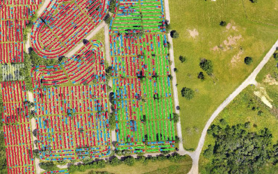 A bird's eye view of Congregation Beth Shalom's cemetery, with colors indicating the status of each plot. (Screenshot courtesy of Lonnie Wolf)