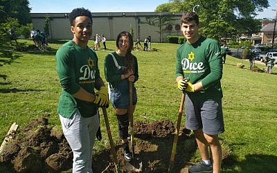 Sean Graves, Emily Pressman and Jackson Blaufeld were among those to plant 11 trees in memory of those who died during the Tree of Life attack. Photo by Adam Reinherz