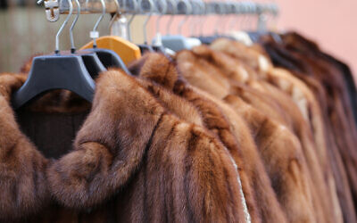 Fur coats (iStock/Getty Images via JTA)