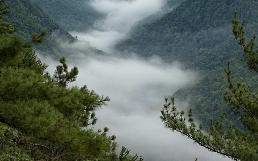 Pennsylvania Grand Canyon covered in mist. Photo by NatureLifePhoto, courtesy of Flickr.com.