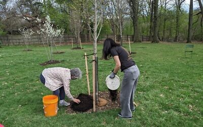 Families and congregants finish mulching trees during the April 11 ceremony in Schenley Park. Photo courtesy of the 10.27 Healing Partnership