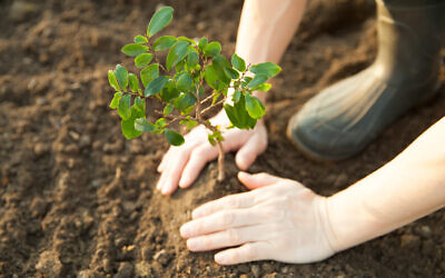 Tree planting. Photo by okugawa via iStock