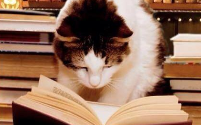 Make like this cat and STUDY!