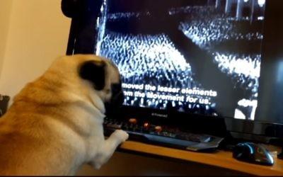 Buddah watching Nazi clips