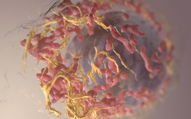 Israeli-German discovery could help cure skin cancer
