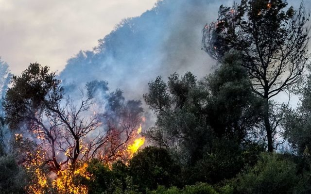 Firefighters try to extinguish a forest fire near ZIchron Yaakov  Photo by: JINIPIX