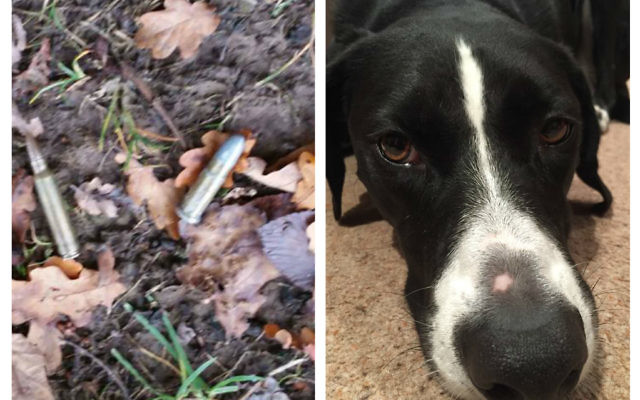 The bullets were sniffed out by Ozzy