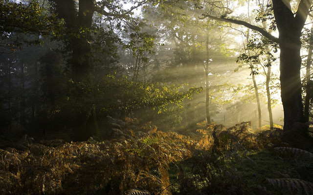 The natural beauty of the New Forest.