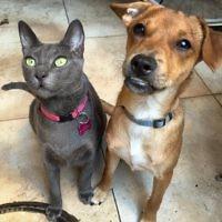 Ashley (cat) & Snoop (dog)