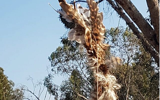 Bird caught in tree which was used to carry an incendiary device