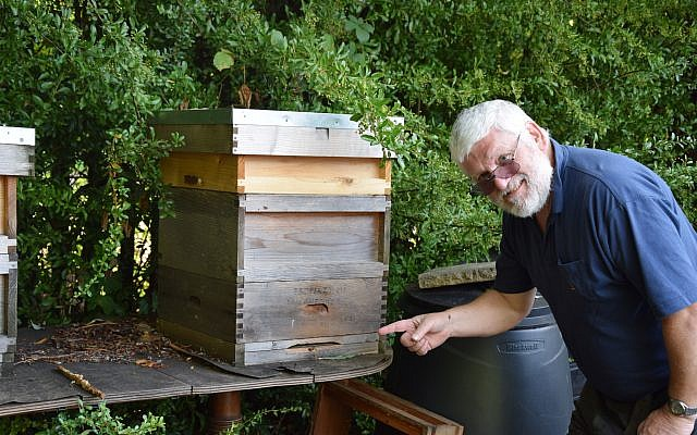 Ian Shenker inspects one of his bee hives