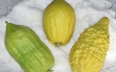 3 etrog varieties