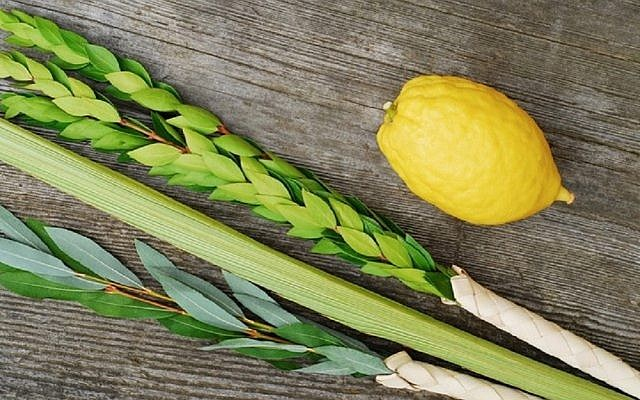 The lulav won't be allowed to be brought into Israel