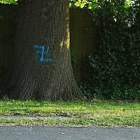 Swastika daubed on a tree in Borehamwood (Credit: @Mendelpol on Twitter)