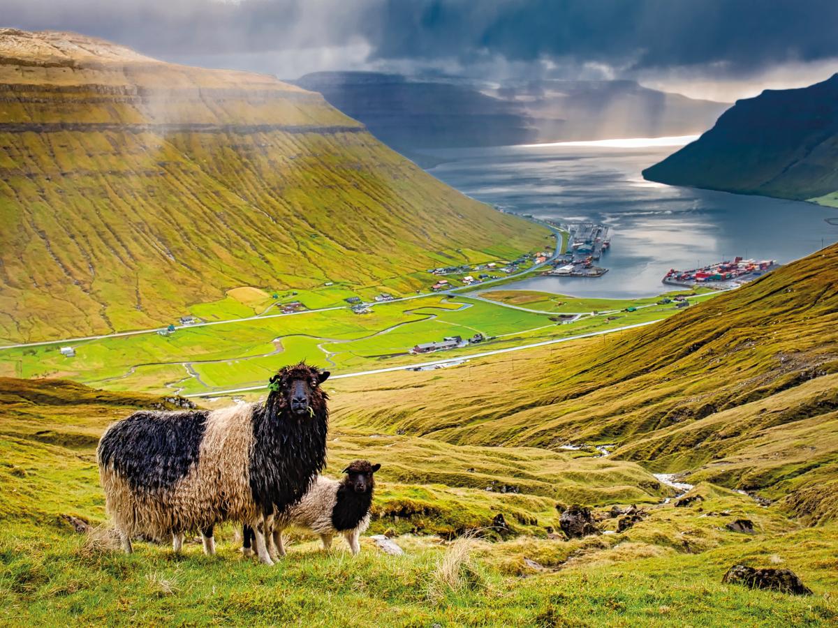 Land Of The Faroes Jewish News