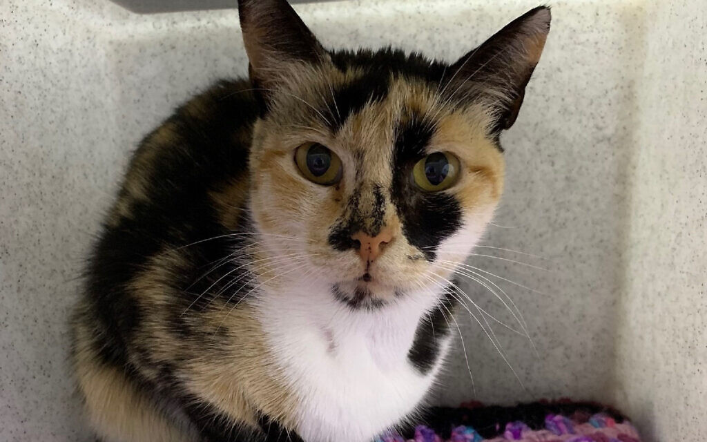 Photo from Cats Protection of cat Izzy (Photo credit: Cats Protection/PA Wire)