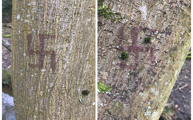 Swastikas found on trees in Epping Forest, reported by a Jewish News reader