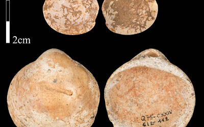 Photo of shells from Qafzeh Cave in Israel. Humans living around 120,000 years ago collected shells with holes in them and strung them together as beads, scientists have discovered. (Photo credit: Bar-Yosef Mayer et al/Plos One/PA Wire)