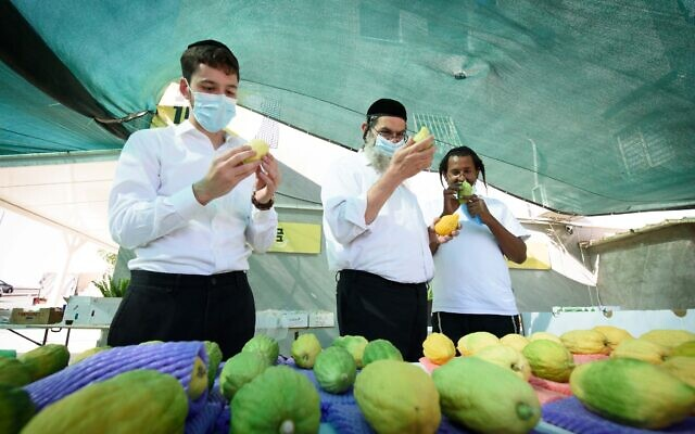 """Ultra orthodox Jewish men shop for """"four species"""" in the northern Israeli city of Tzfat, on September 29, 2020, ahead of the Jewish holiday of Sukkot.  Photo by: Ayal Margolin-JINIPIX"""