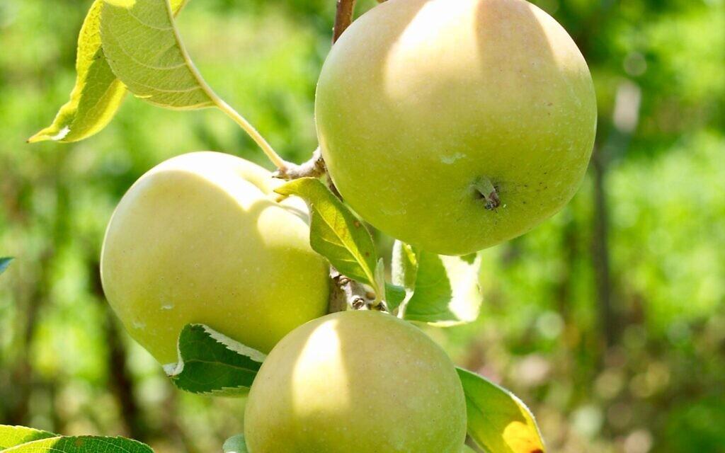 Fruit on a tree (Photo by Diane Helentjaris on Unsplash)