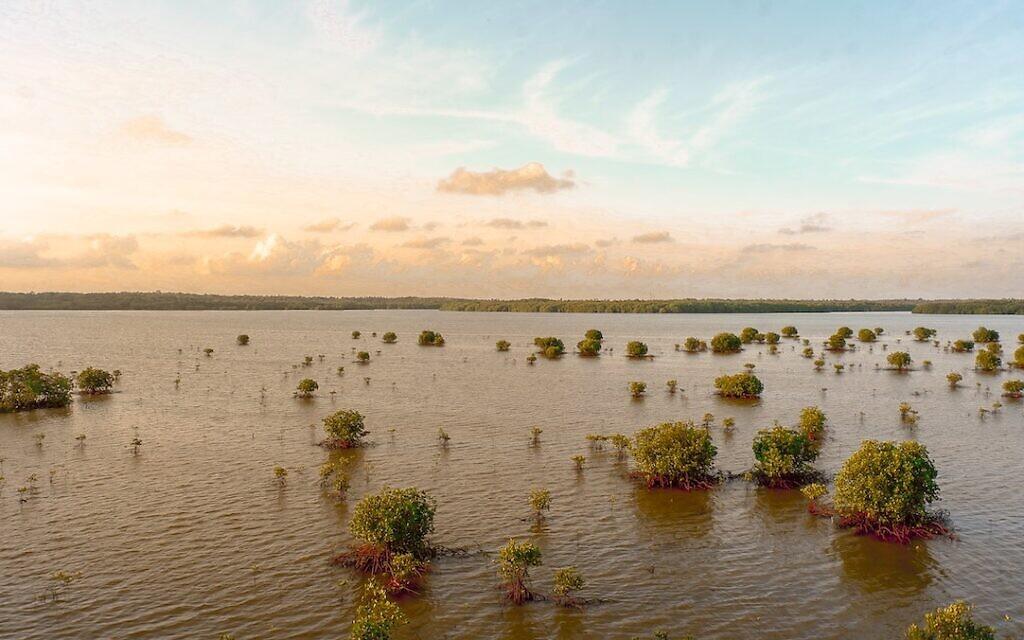 Flood (Photo by rachman reilli on Unsplash)