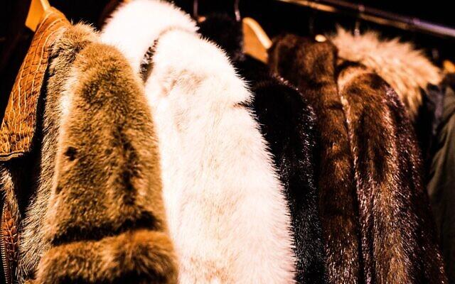 Fur. (Photo by Charisse Kenion on Unsplash)