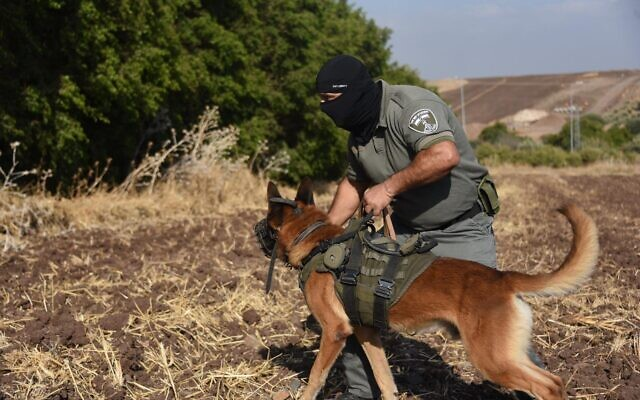 An Israel Border Police dog handler with his dog during the search (Wikipedia/Israel Police/(CC BY-SA 3.0))