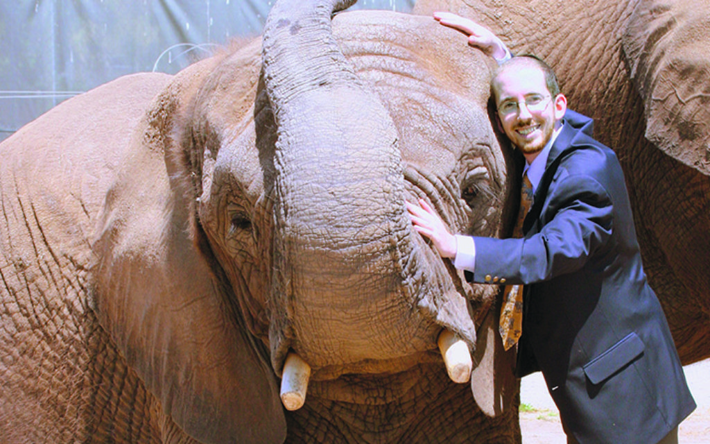 Rabbi Nathan Slifkin poses with a de-tusked elephant in Africa.