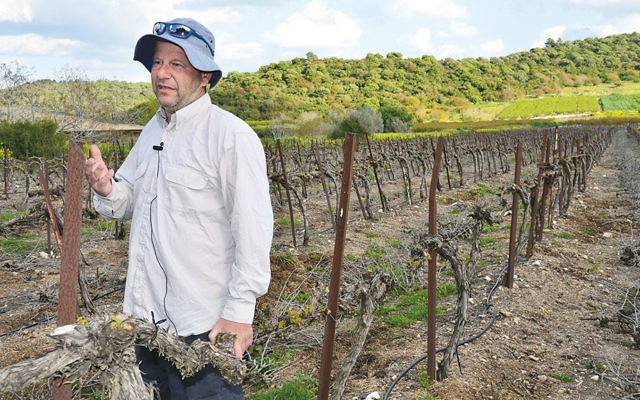 Eyal Goldner of Moshav Amikam, like the other farmers shown here, is observing the shmitah year.