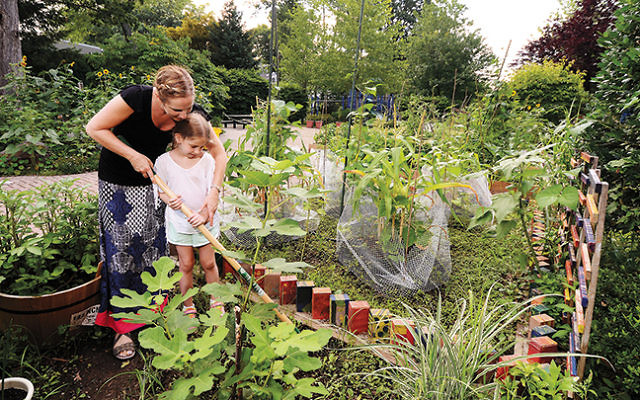 Heather Rabinowitz and her daughter Liana,  a Schechter student, work in the garden together. Photo by Veronica Yankowski