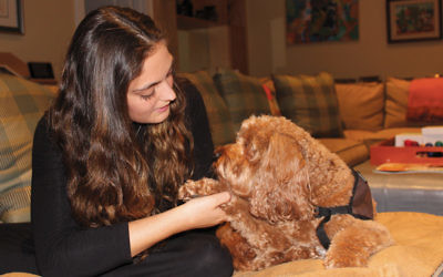 Shana Horn, a psychology major at Yeshiva Universiy, plays with her therapy dog, Rosie, a 4-year-old mini-labradoodle, who works with her at the Jewish Home in Rockleigh.