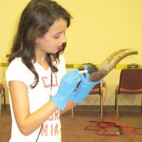 Students at Wayne's Shomrei Torah religious school learned hands-on about the shofar with Rabbi Yisroel Rosenblum of Living Legacy. (Courtesy Shomrei Torah)