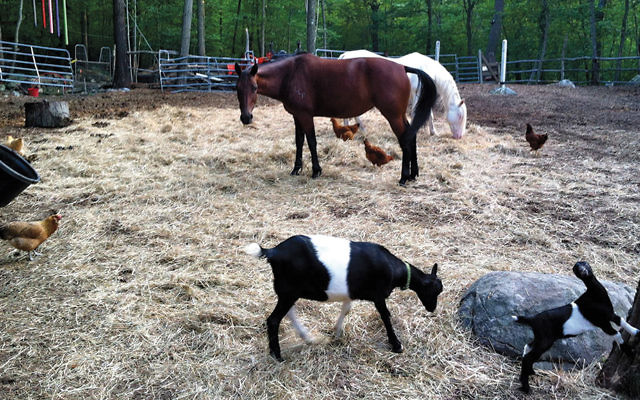 Rescued animals at home at TevaLand.