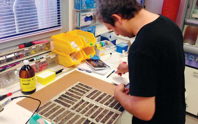 Inside the studio of the Israeli start-up SolarPaint. (Courtesy of SolarPaint)